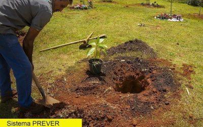 """JUNHO VERDE: No mês do meio ambiente o Sistema Prever destaca o projeto """"Árvore da Vida"""""""